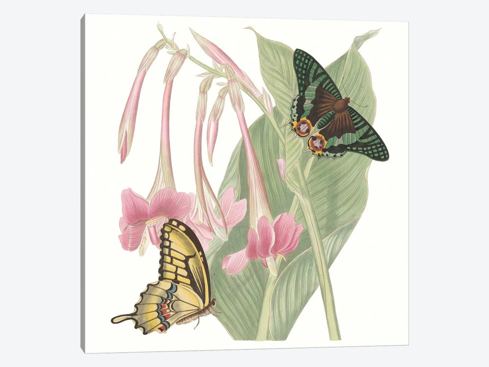 Les Papillons II by Vision Studio 1-piece Canvas Wall Art