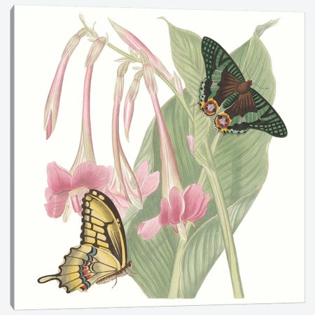 Les Papillons II Canvas Print #VSN431} by Vision Studio Canvas Print