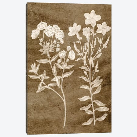 Botanical in Taupe I Canvas Print #VSN440} by Vision Studio Canvas Wall Art