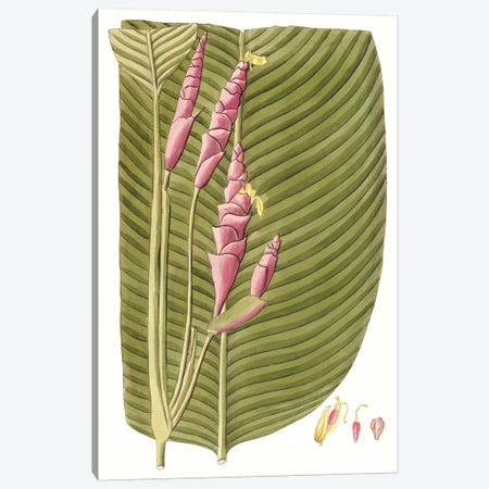 Leaves of the Tropics I Canvas Print #VSN481} by Vision Studio Canvas Wall Art
