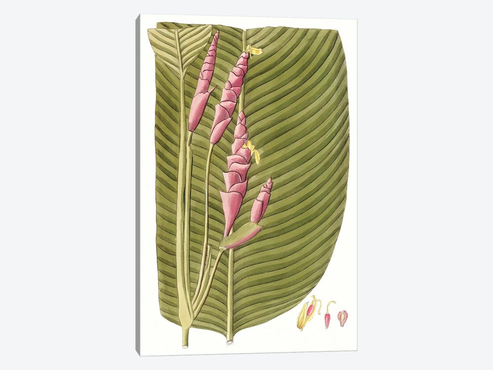 Leaves of the Tropics I by Vision Studio 1-piece Canvas Art Print
