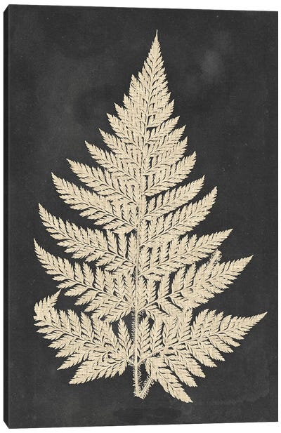 Linen Fern I by Vision Studio Canvas Art Print