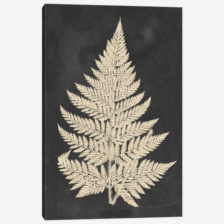 Linen Fern I 3-Piece Canvas #VSN487} by Vision Studio Canvas Art Print