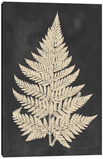 Linen Fern I Canvas Art Print