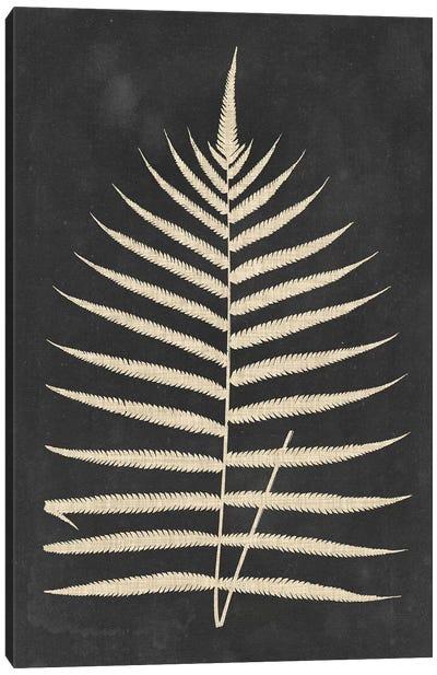 Linen Fern III Canvas Art Print