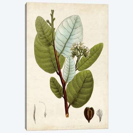Verdant Foliage I Canvas Print #VSN491} by Vision Studio Canvas Print