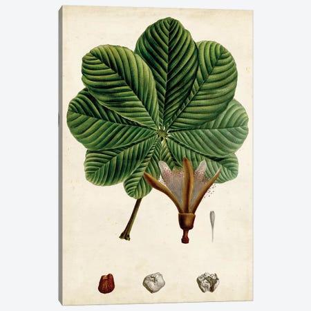 Verdant Foliage II Canvas Print #VSN492} by Vision Studio Art Print