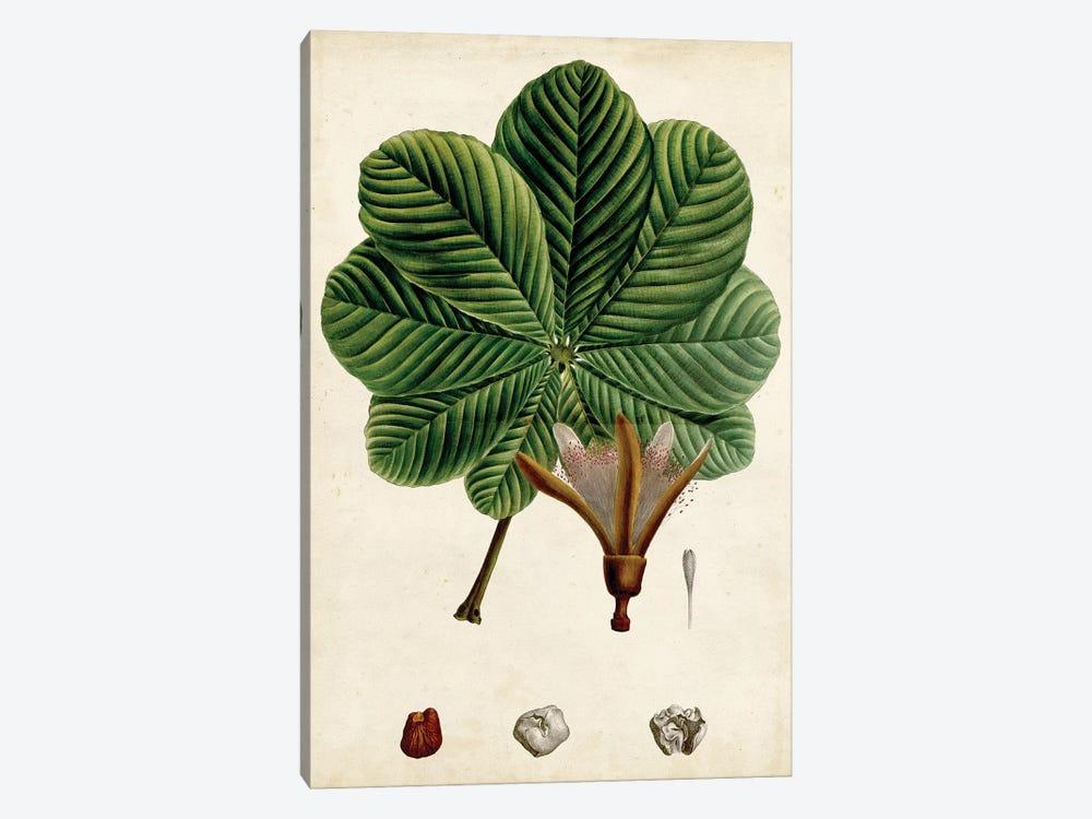 Verdant Foliage II by Vision Studio 1-piece Canvas Art Print