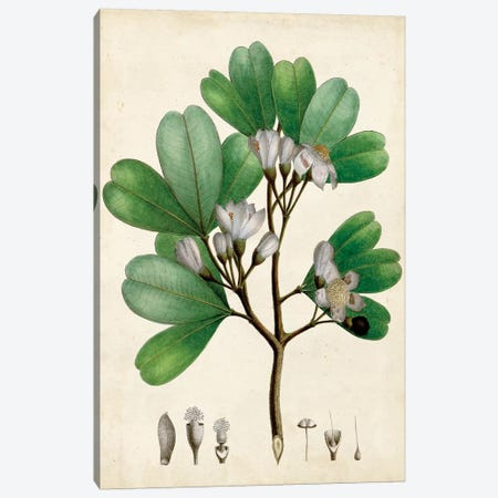 Verdant Foliage III Canvas Print #VSN493} by Vision Studio Canvas Print