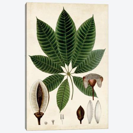 Verdant Foliage VII Canvas Print #VSN497} by Vision Studio Canvas Art