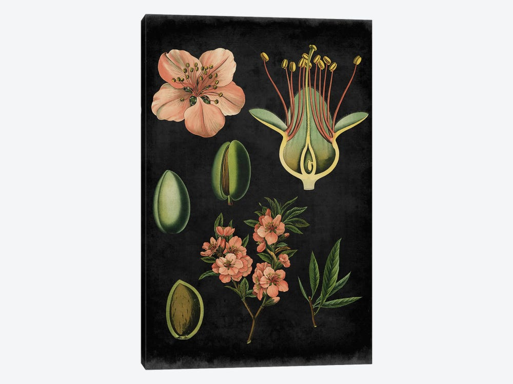 Study In Botany I 1-piece Canvas Print
