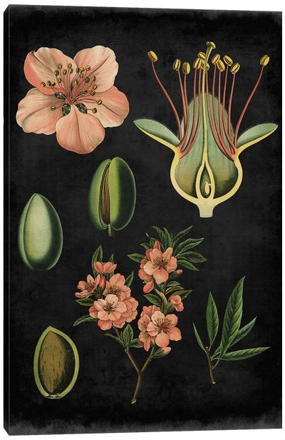Study In Botany I Canvas Print #VSN49