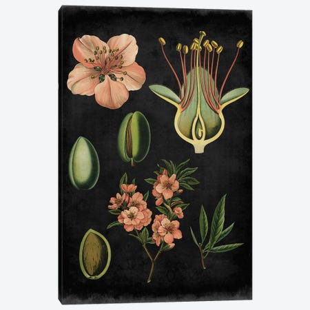 Study In Botany I Canvas Print #VSN49} by Vision Studio Canvas Wall Art