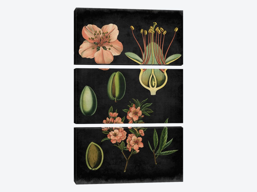 Study In Botany I by Vision Studio 3-piece Canvas Print
