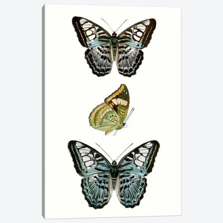 Butterfly Specimen I 3-Piece Canvas #VSN505} by Vision Studio Canvas Wall Art