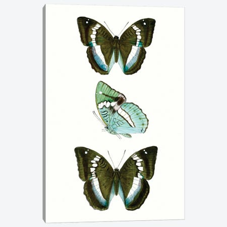 Butterfly Specimen II Canvas Print #VSN506} by Vision Studio Canvas Wall Art