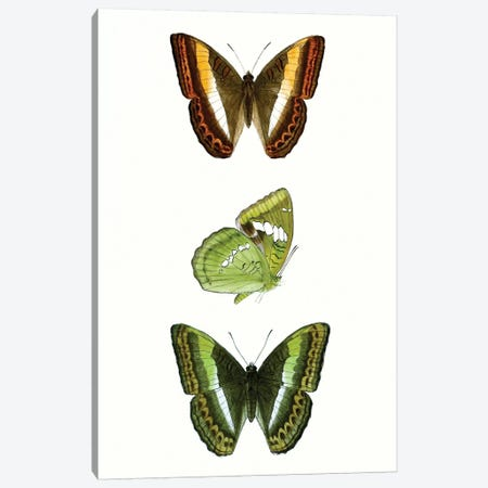 Butterfly Specimen III 3-Piece Canvas #VSN507} by Vision Studio Canvas Artwork