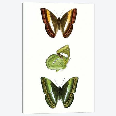 Butterfly Specimen III Canvas Print #VSN507} by Vision Studio Canvas Artwork