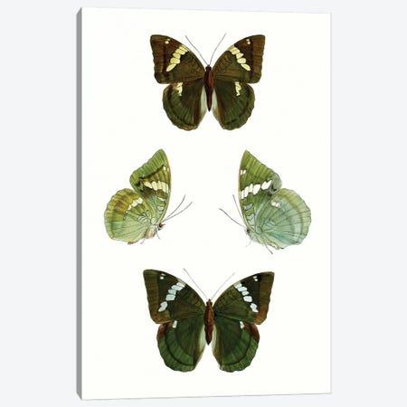 Butterfly Specimen V 3-Piece Canvas #VSN509} by Vision Studio Art Print