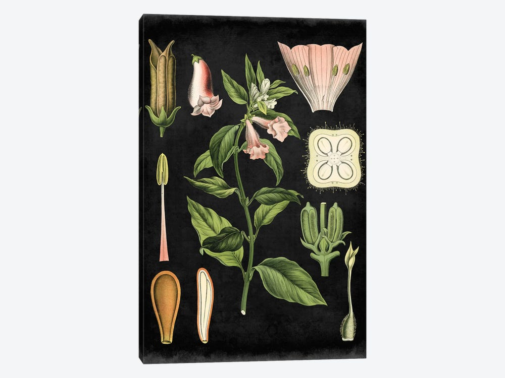 Study In Botany II by Vision Studio 1-piece Canvas Print