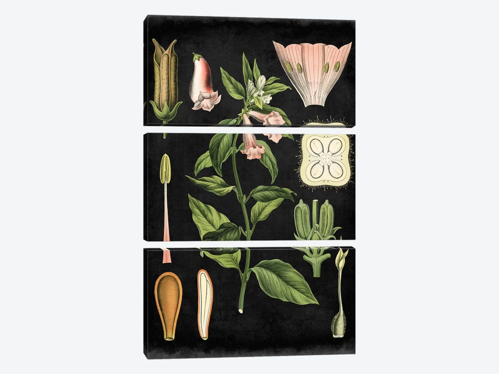 Study In Botany II by Vision Studio 3-piece Art Print