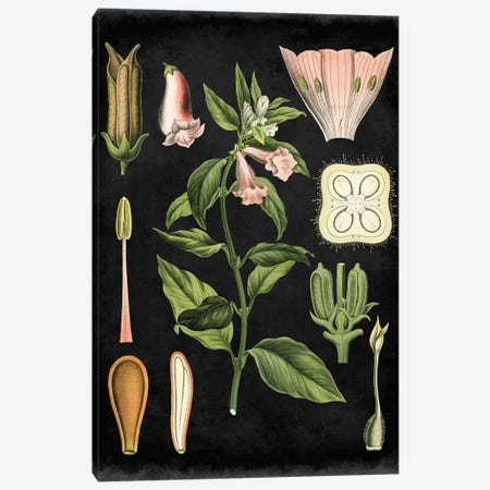 Study In Botany II Canvas Print #VSN50} by Vision Studio Canvas Print