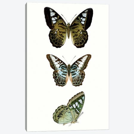 Butterfly Specimen VI 3-Piece Canvas #VSN510} by Vision Studio Canvas Wall Art