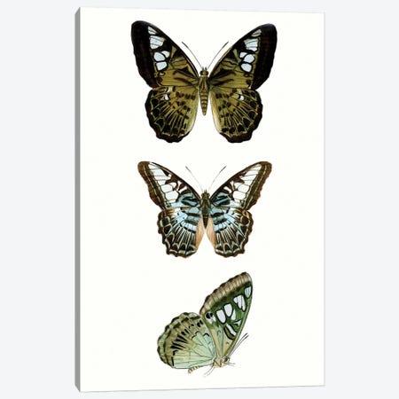 Butterfly Specimen VI Canvas Print #VSN510} by Vision Studio Canvas Wall Art