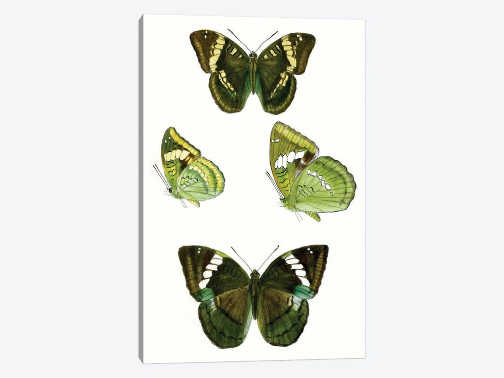 Butterfly Specimen VII by Vision Studio 1-piece Canvas Art Print