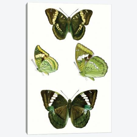 Butterfly Specimen VII 3-Piece Canvas #VSN511} by Vision Studio Canvas Wall Art