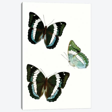 Butterfly Specimen VIII Canvas Print #VSN512} by Vision Studio Canvas Art