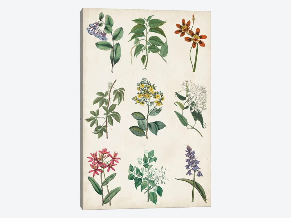 Botanical Chart I by Vision Studio 1-piece Art Print