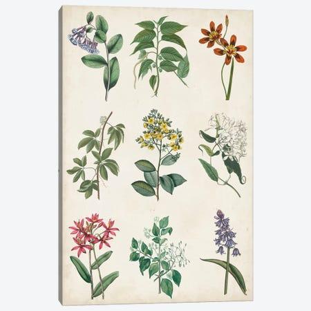 Botanical Chart I Canvas Print #VSN517} by Vision Studio Canvas Art Print