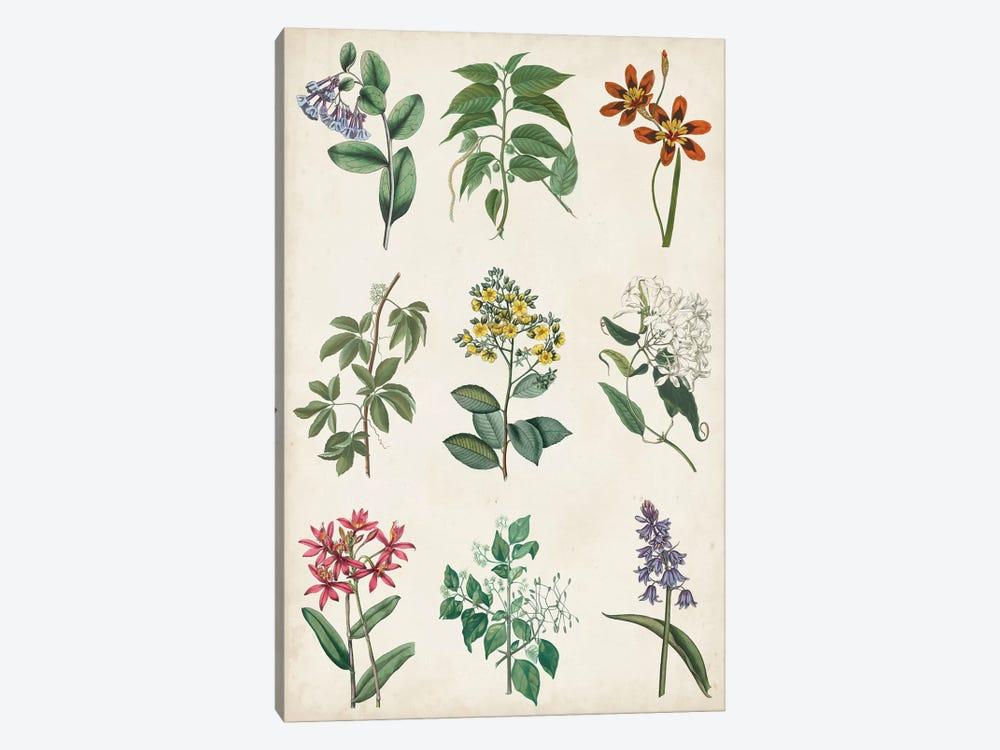 Botanical Chart I by Vision Studio 1-piece Art Print