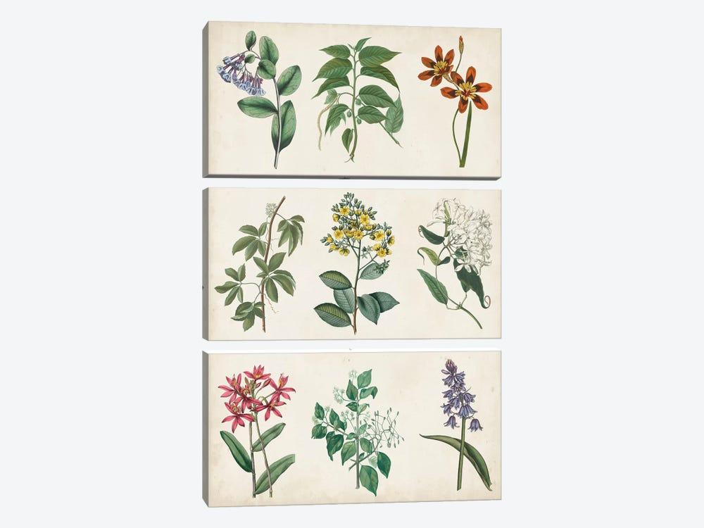 Botanical Chart I by Vision Studio 3-piece Canvas Print