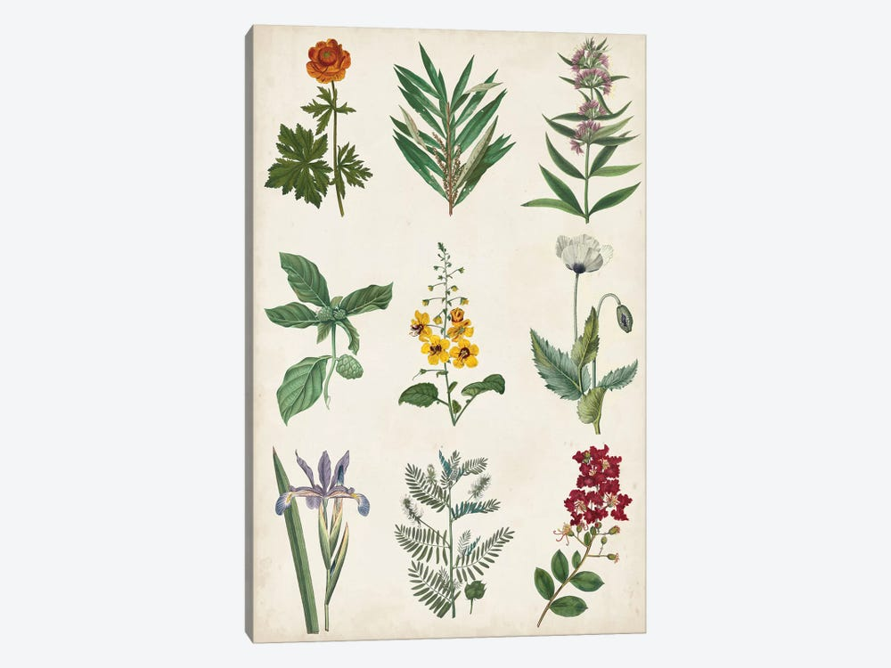 Botanical Chart II by Vision Studio 1-piece Canvas Art