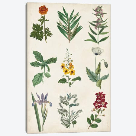 Botanical Chart II 3-Piece Canvas #VSN518} by Vision Studio Canvas Art