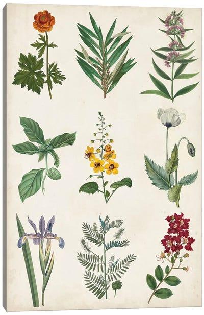 Botanical Chart II Canvas Art Print