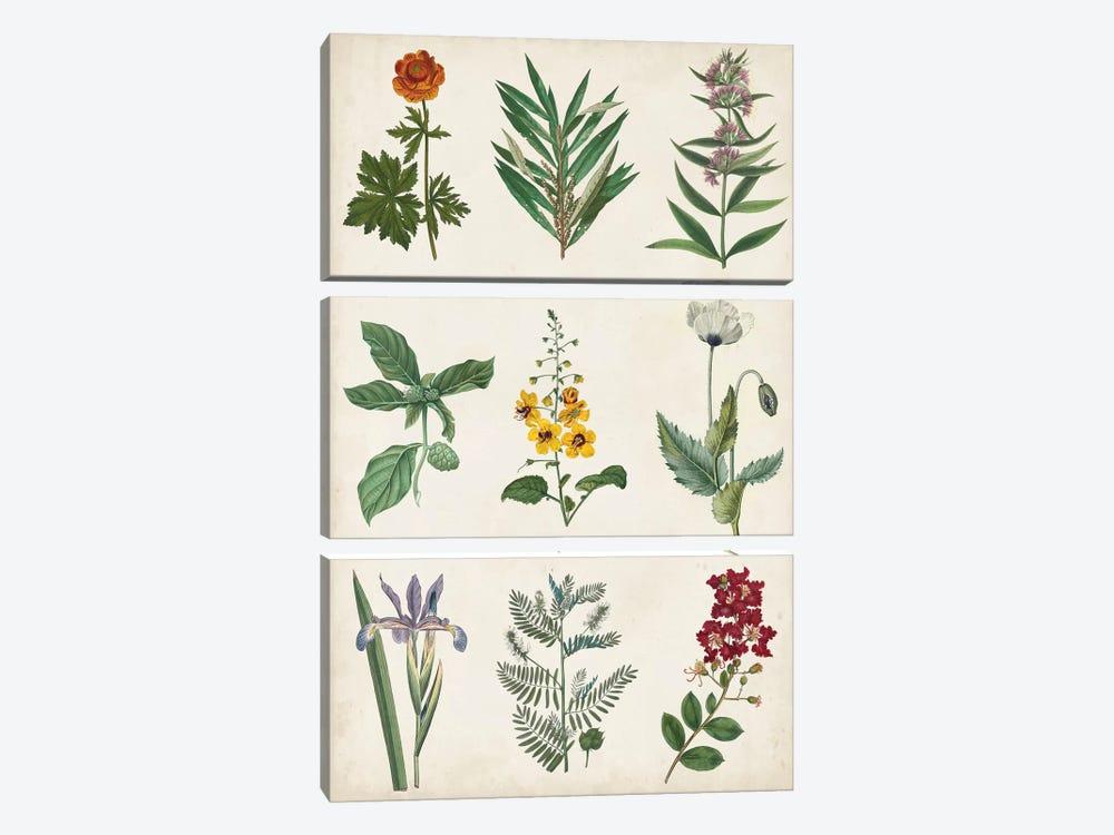 Botanical Chart II by Vision Studio 3-piece Canvas Art