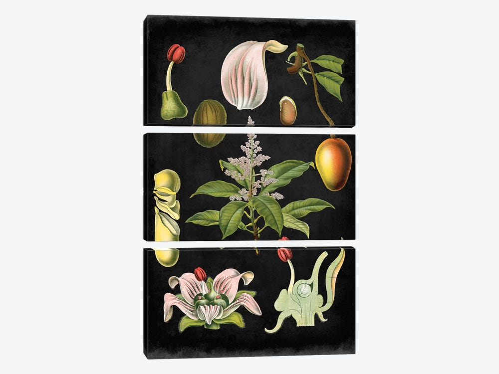 Study In Botany III by Vision Studio 3-piece Canvas Art