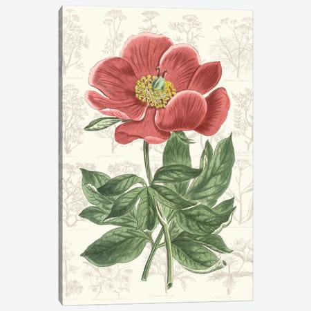 Peony Flower Garden II Canvas Print #VSN528} by Vision Studio Canvas Art Print