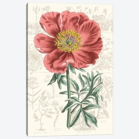 Peony Flower Garden IV Canvas Print #VSN530} by Vision Studio Canvas Art