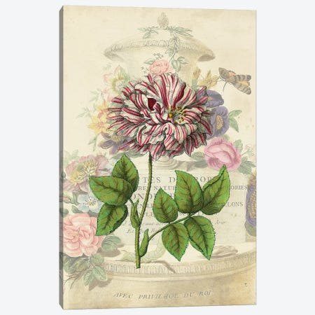 Vintage Rose Bookplate Canvas Print #VSN536} by Vision Studio Art Print