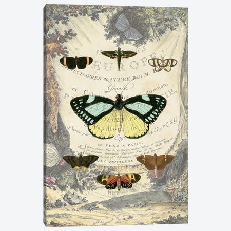 Vintage Butterfly Bookplate Canvas Print #VSN537} by Vision Studio Canvas Art Print