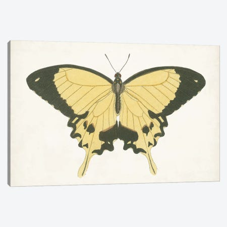 Beautiful Butterfly I Canvas Print #VSN580} by Vision Studio Canvas Print
