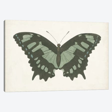 Beautiful Butterfly II Canvas Print #VSN581} by Vision Studio Canvas Print