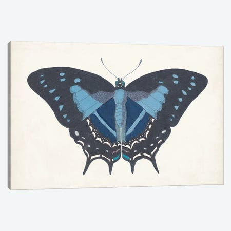 Beautiful Butterfly III Canvas Print #VSN582} by Vision Studio Art Print