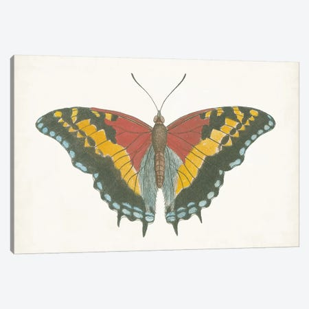 Beautiful Butterfly IV 3-Piece Canvas #VSN583} by Vision Studio Canvas Print
