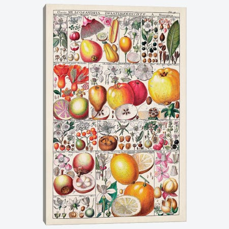Fruit Chart Canvas Print #VSN587} by Vision Studio Canvas Art