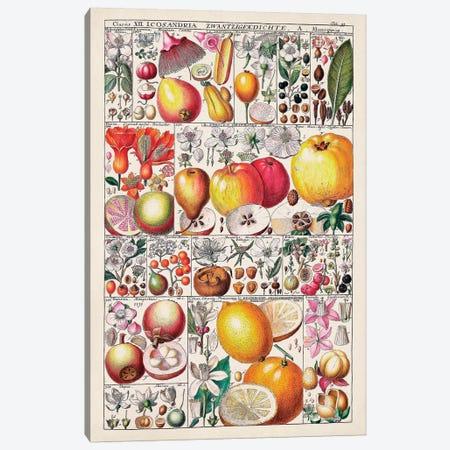 Fruit Chart Canvas Print #VSN587} by Vision Studio Canvas Art